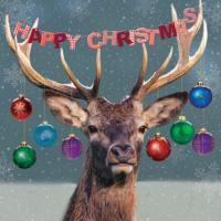 Festive stag - 10 cards
