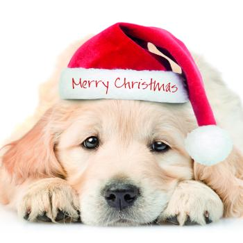 Christmas puppy - 10 cards