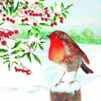 Watercolour robin - 10 cards